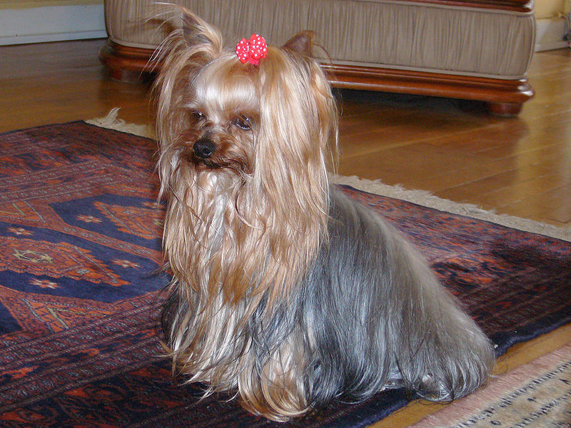 Фото собак и название породы 5